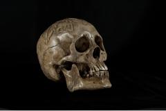 SkullRFrontCropSmall